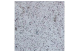 white_pearl_granite_LARGE